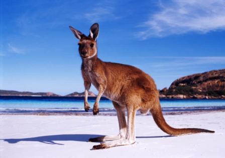 Австралия туры дайвинг и экскурсии
